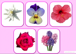 loto fleurs